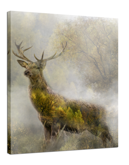 Big_deer_75x100_st351_a