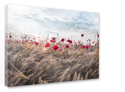 Big_st573_boho_poppies_75x100_s