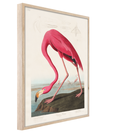 Big_fp039_flamingo_50x70_s